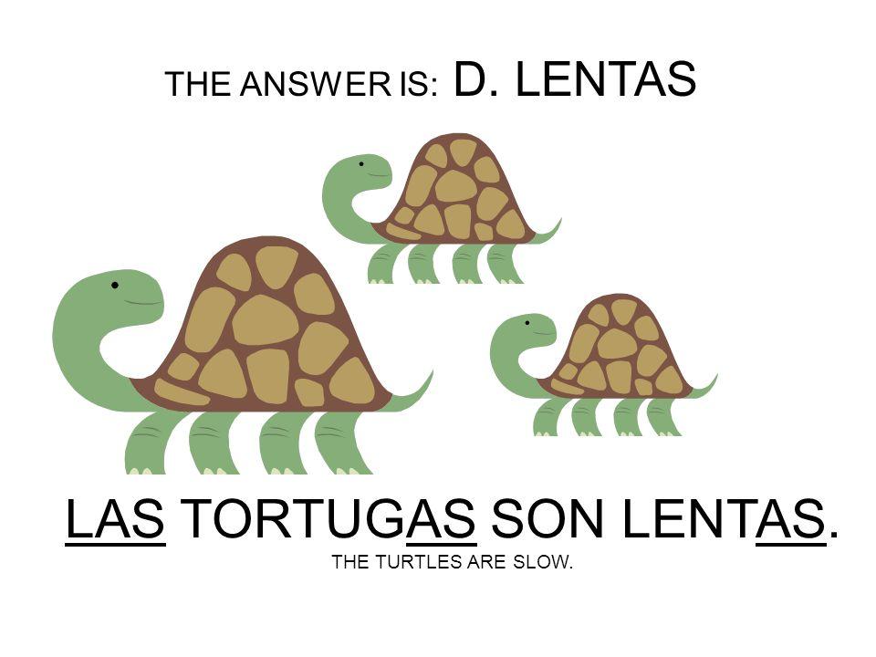 LAS TORTUGAS SON ______. A.LENTOS B.LENTO C.LENTA D.LENTAS