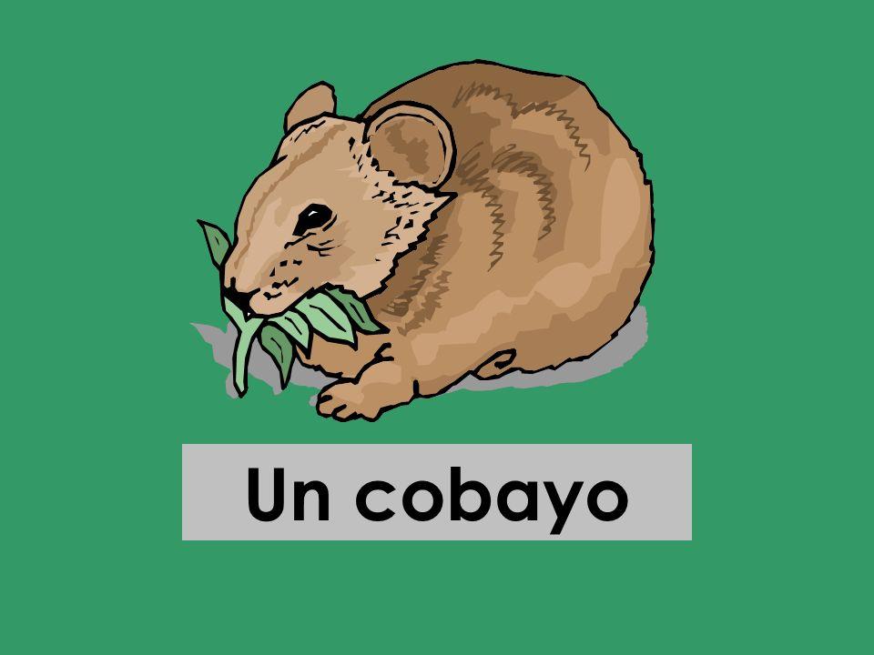 Un cobayo