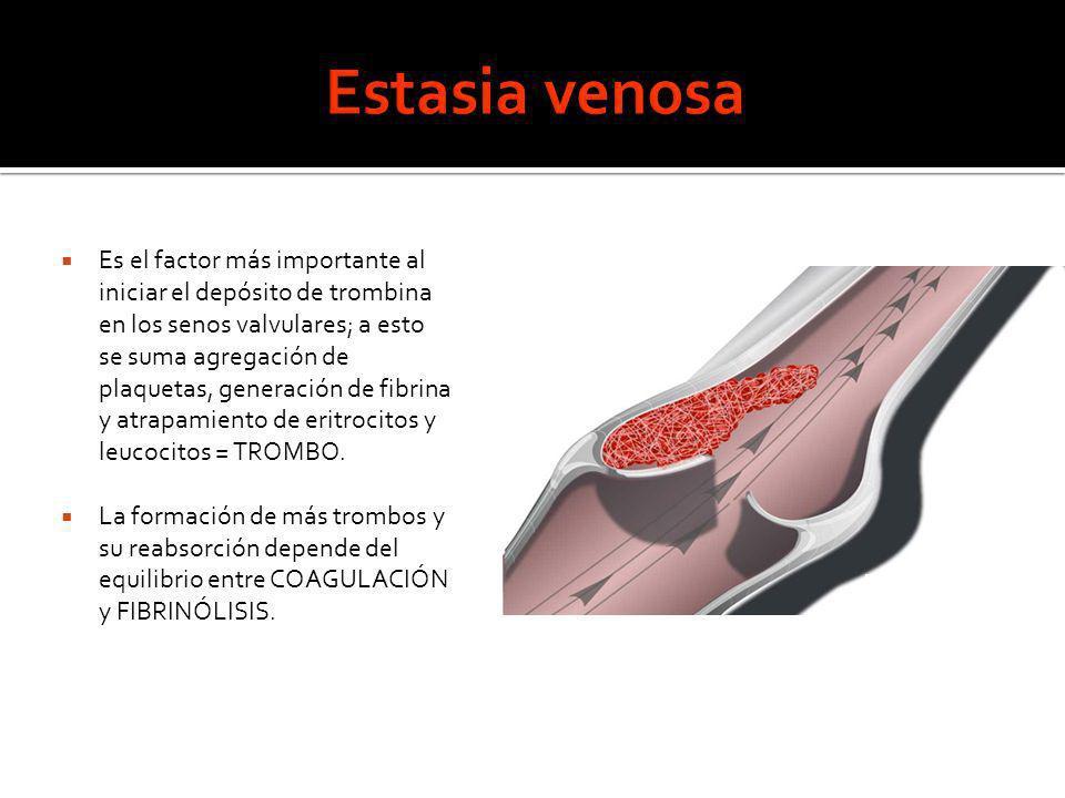 Es el factor más importante al iniciar el depósito de trombina en los senos valvulares; a esto se suma agregación de plaquetas, generación de fibrina