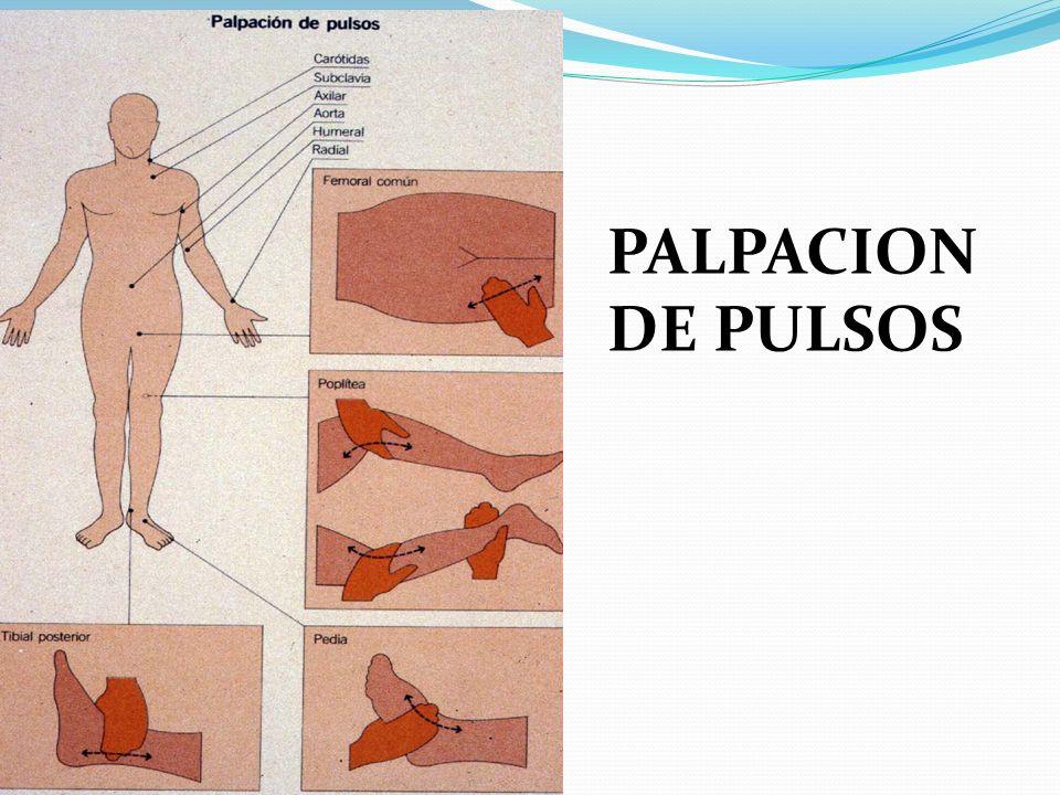 PALPACION DE PULSOS