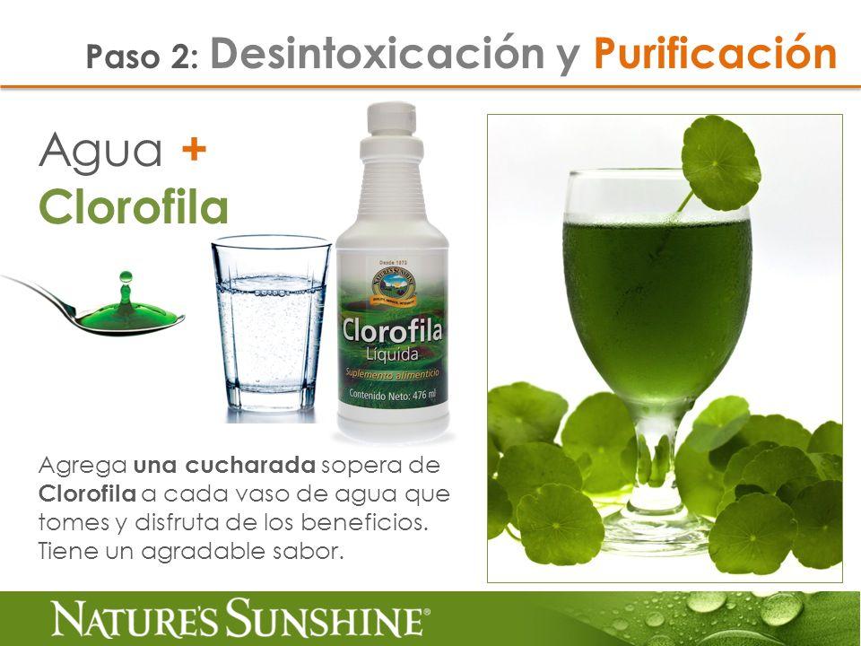 Agua + Clorofila Paso 2: Desintoxicación y Purificación Agrega una cucharada sopera de Clorofila a cada vaso de agua que tomes y disfruta de los benef