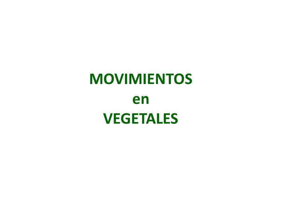 MOVIMIENTOS en VEGETALES