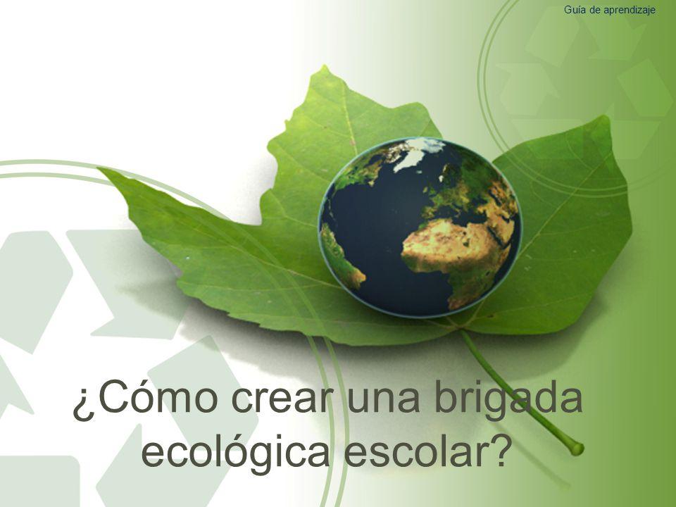 ¿Cómo crear una brigada ecológica escolar? Guía de aprendizaje