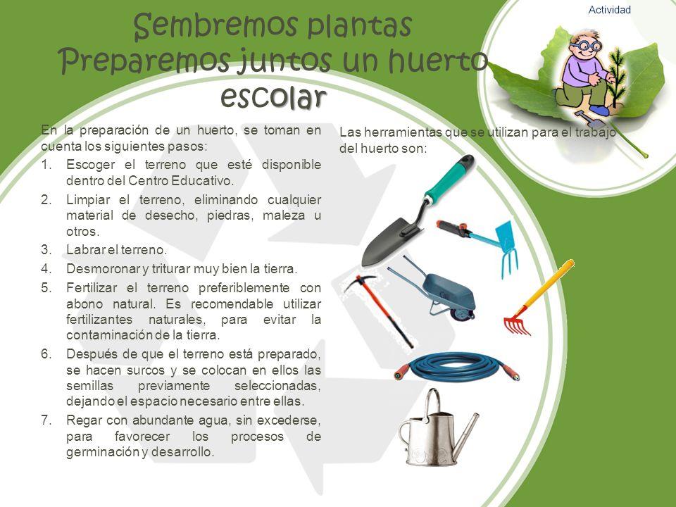 olar Sembremos plantas Preparemos juntos un huerto escolar En la preparación de un huerto, se toman en cuenta los siguientes pasos: 1.Escoger el terre
