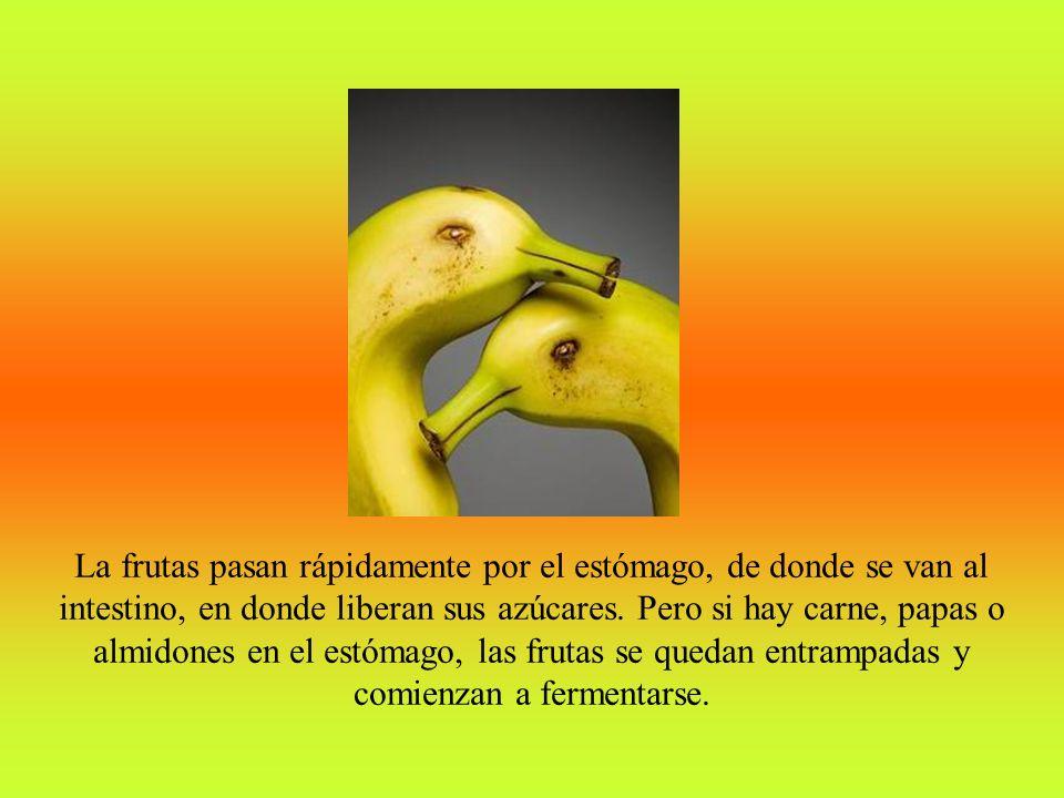 La frutas pasan rápidamente por el estómago, de donde se van al intestino, en donde liberan sus azúcares.