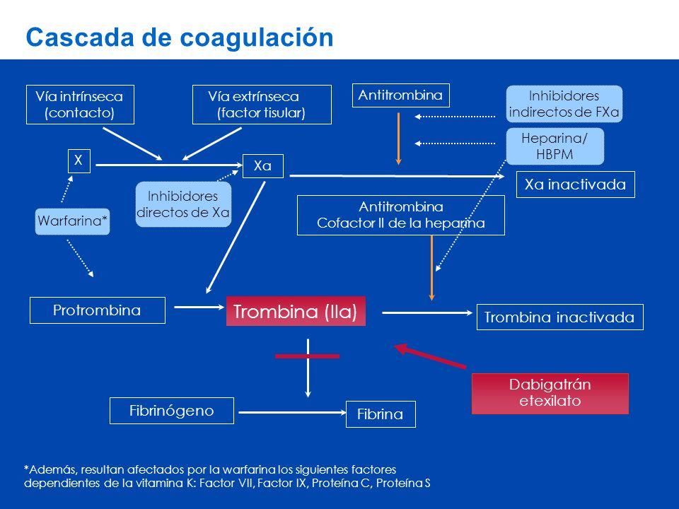 Cascada de coagulación Xa inactivada Antitrombina Cofactor II de la heparina Trombina (IIa) Vía intrínseca (contacto) Xa Trombina inactivada Protrombina Fibrinógeno Fibrina X Vía extrínseca (factor tisular) Dabigatrán etexilato Heparina/ HBPM Inhibidores indirectos de FXa Inhibidores directos de Xa Warfarina* *Además, resultan afectados por la warfarina los siguientes factores dependientes de la vitamina K: Factor VII, Factor IX, Proteína C, Proteína S