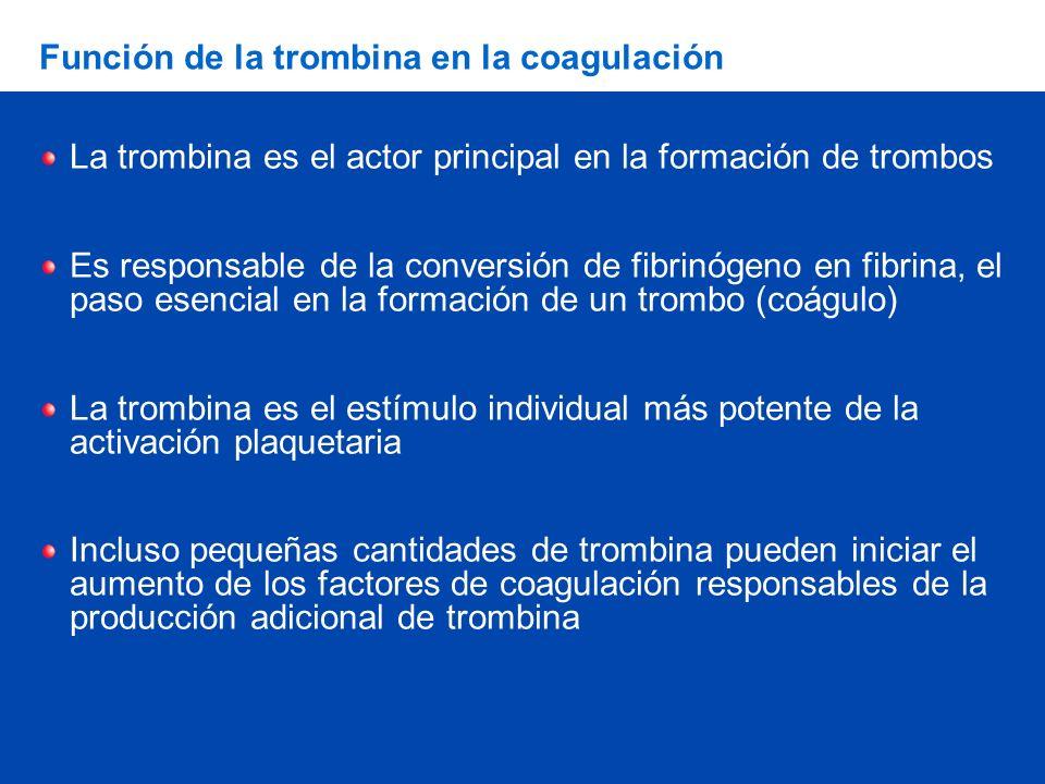 Función de la trombina en la coagulación La trombina es el actor principal en la formación de trombos Es responsable de la conversión de fibrinógeno e