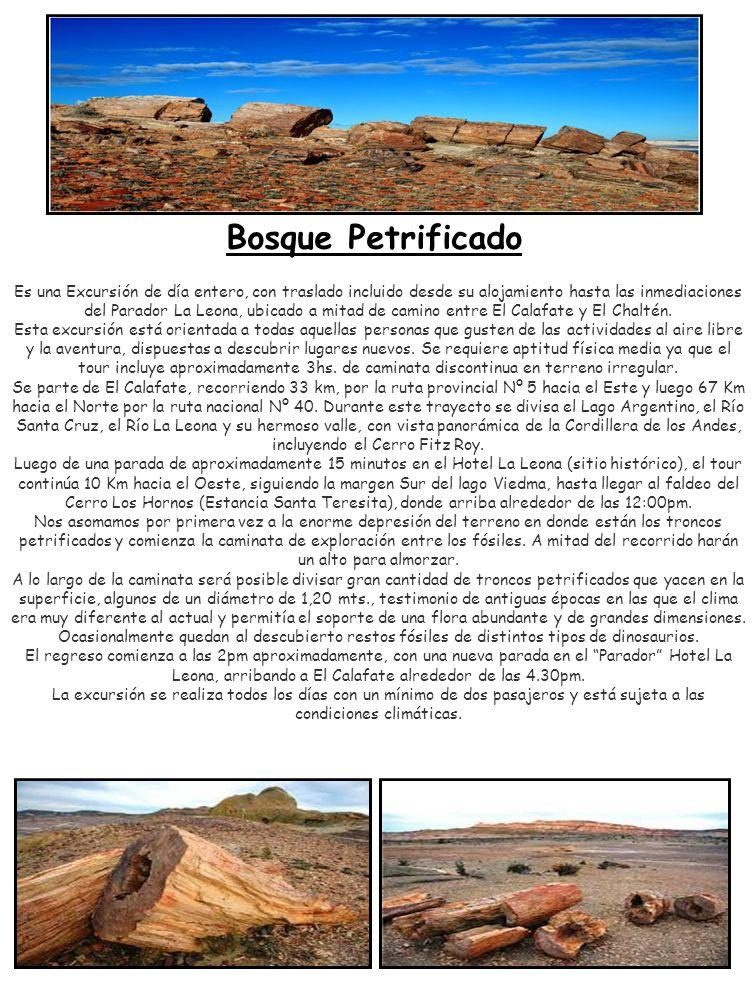 Bosque Petrificado Es una Excursión de día entero, con traslado incluido desde su alojamiento hasta las inmediaciones del Parador La Leona, ubicado a