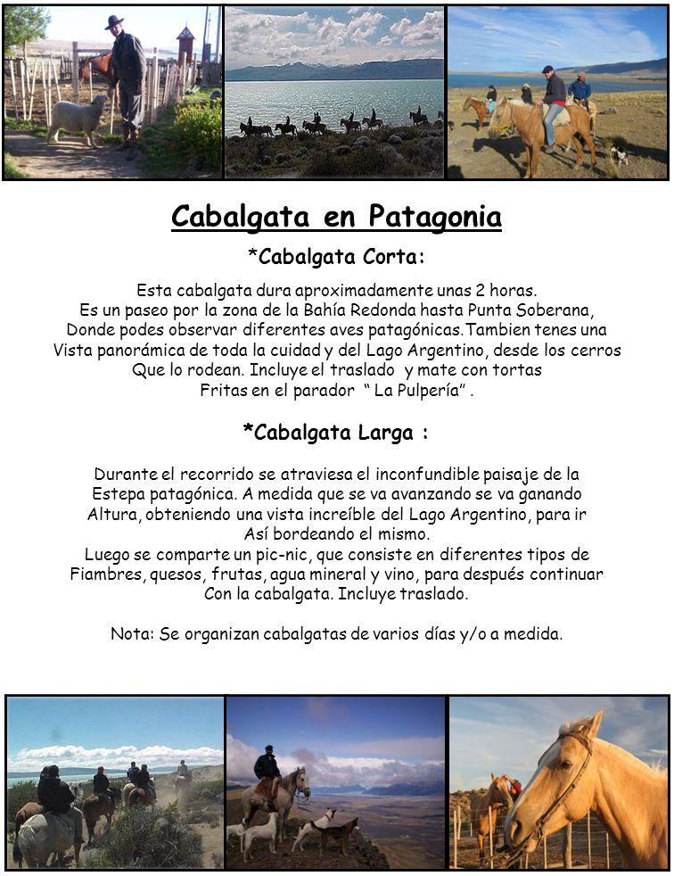 Cabalgata en Patagonia *Cabalgata Corta: Esta cabalgata dura aproximadamente unas 2 horas. Es un paseo por la zona de la Bahía Redonda hasta Punta Sob