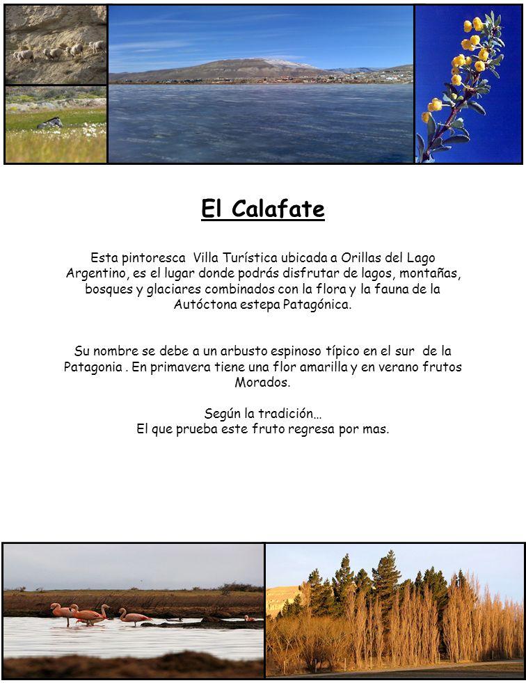 El Calafate Esta pintoresca Villa Turística ubicada a Orillas del Lago Argentino, es el lugar donde podrás disfrutar de lagos, montañas, bosques y gla
