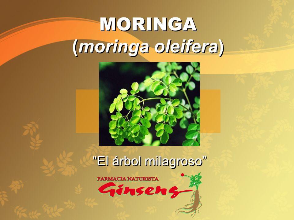 MORINGA (moringa oleifera) MORINGA (moringa oleifera) El árbol milagroso El árbol milagroso