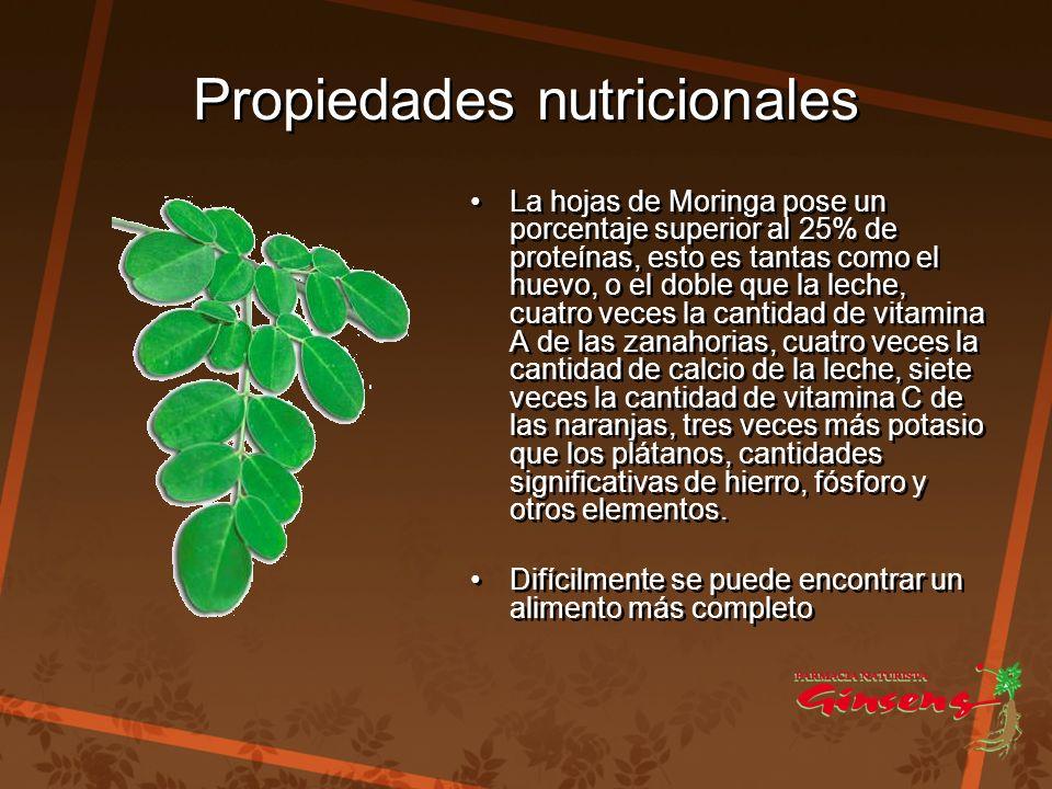 Propiedades nutricionales Propiedades nutricionales La hojas de Moringa pose un porcentaje superior al 25% de proteínas, esto es tantas como el huevo,