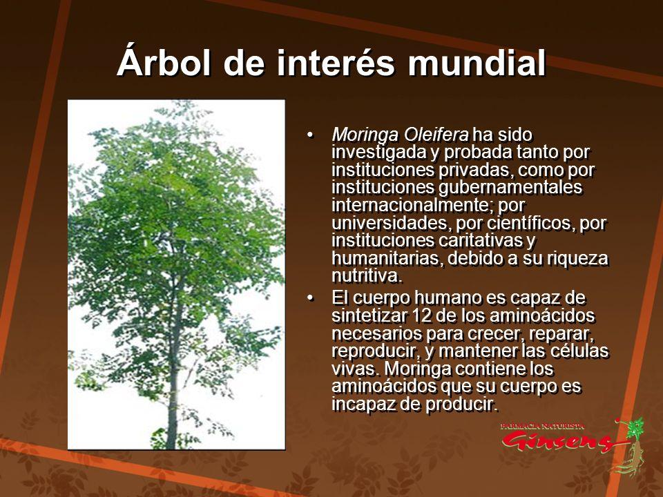 Árbol de interés mundial Árbol de interés mundial Moringa Oleifera ha sido investigada y probada tanto por instituciones privadas, como por institucio