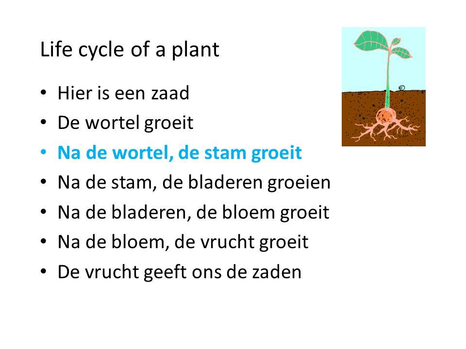 Life cycle of a plant Hier is een zaad De wortel groeit Na de stam, de bladeren groeien Na de bladeren, de bloem groeit Na de bloem, de vrucht groeit
