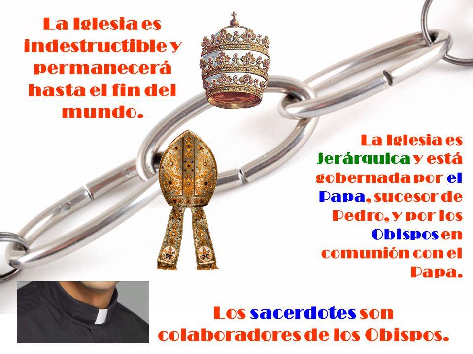 Por Institución Divina, los Obispos suceden a los Apóstoles, en cadena ininterrumpida, como Pastores de la Iglesia. El que los escucha, escucha a Cris
