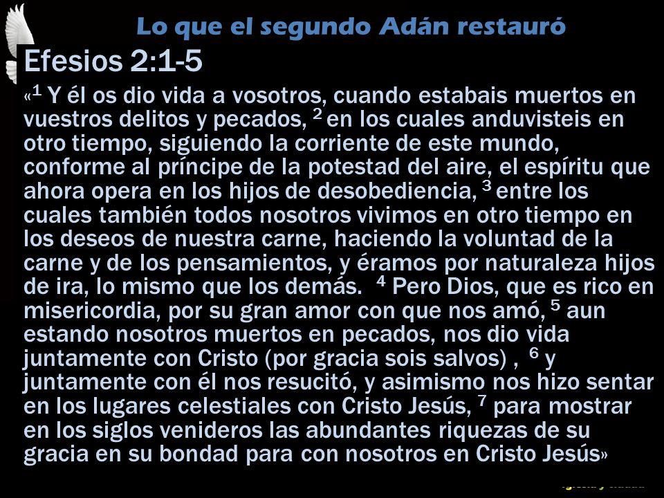 © Dr. Jerry Brown 2010 Lo que el segundo Adán restauró Efesios 2:1-5 « 1 Y él os dio vida a vosotros, cuando estabais muertos en vuestros delitos y pe