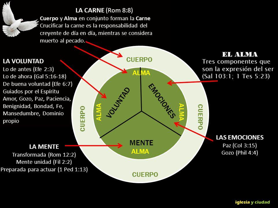 © Dr. Jerry Brown 2010 CUERPO EMOCIONES MENTE VOLUNTAD ALMA LAS EMOCIONES Paz (Col 3:15) Gozo (Phil 4:4) LA MENTE Transformada (Rom 12:2) Mente unidad