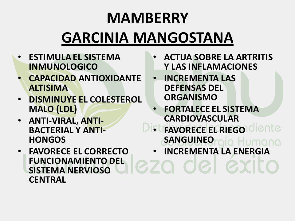 MAMBERRY GARCINIA MANGOSTANA ESTIMULA EL SISTEMA INMUNOLOGICO CAPACIDAD ANTIOXIDANTE ALTISIMA DISMINUYE EL COLESTEROL MALO (LDL) ANTI-VIRAL, ANTI- BAC