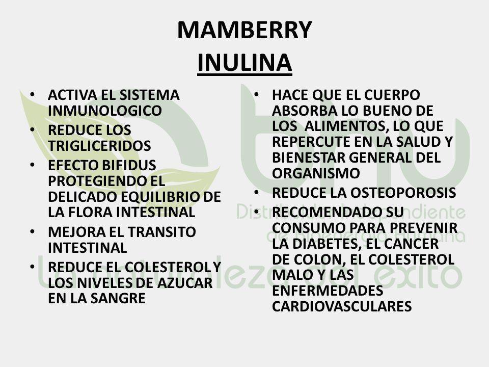 MAMBERRY INULINA ACTIVA EL SISTEMA INMUNOLOGICO REDUCE LOS TRIGLICERIDOS EFECTO BIFIDUS PROTEGIENDO EL DELICADO EQUILIBRIO DE LA FLORA INTESTINAL MEJO