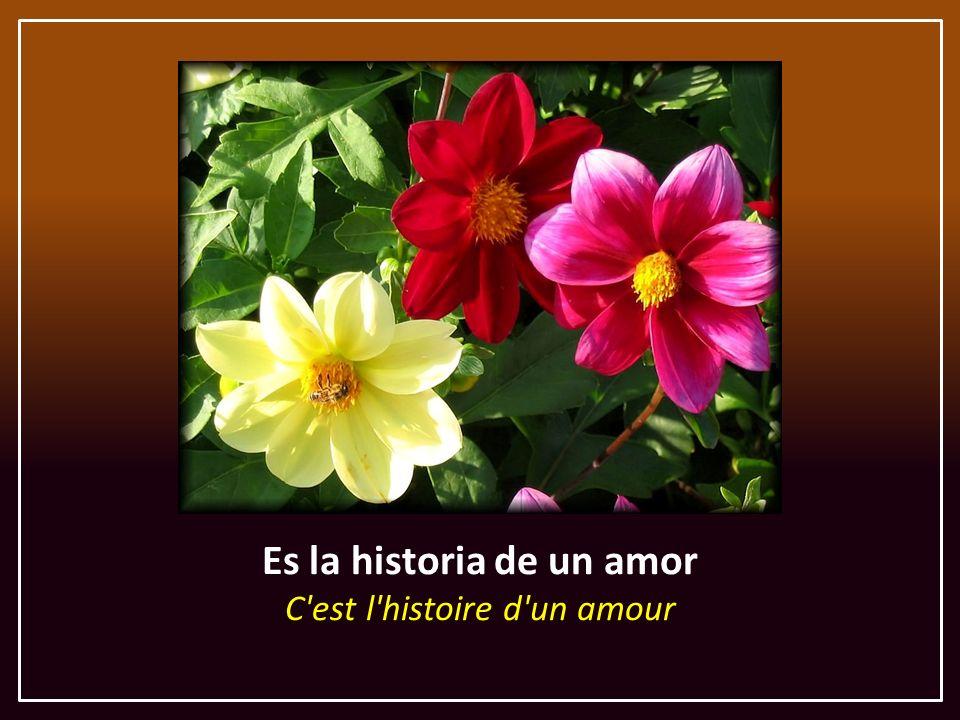 El amor y la pasión L'amour et la passion