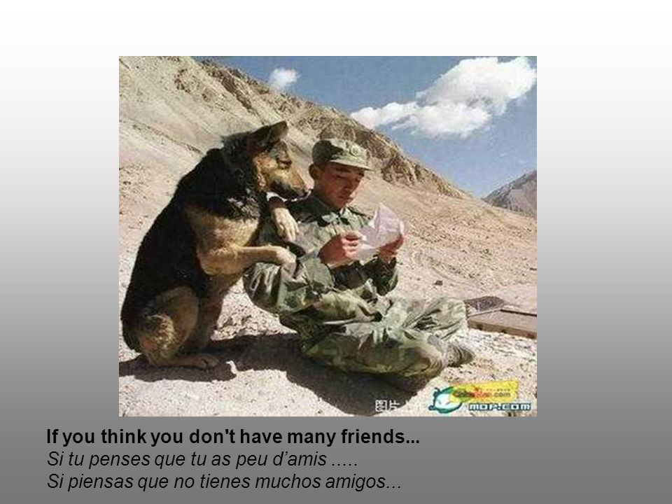 If you think you don t have many friends...Si tu penses que tu as peu damis.....