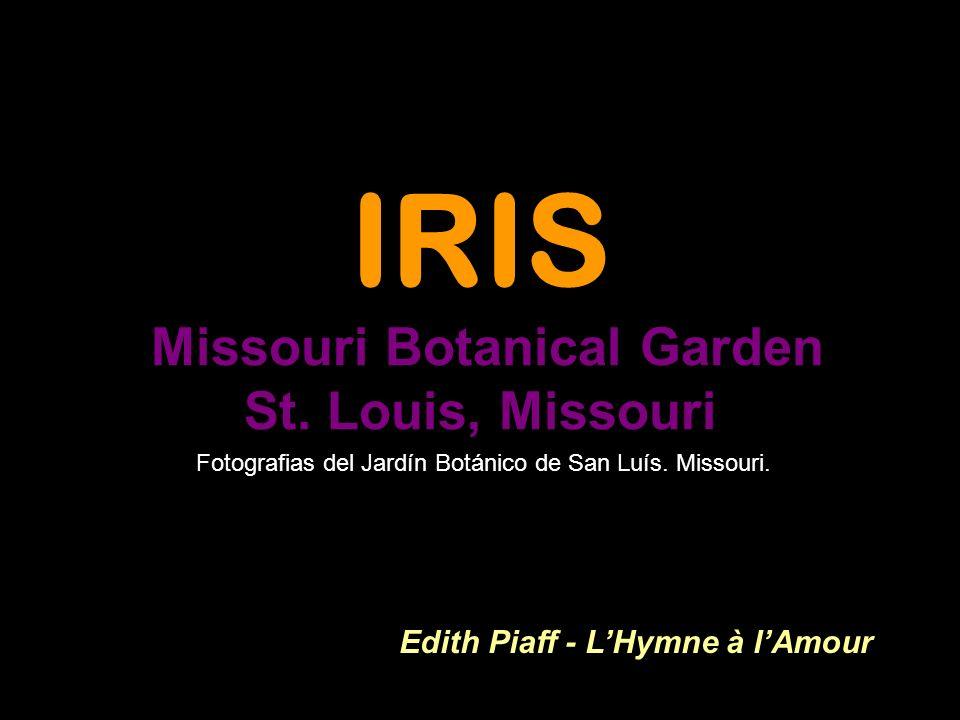 IRIS Missouri Botanical Garden St.
