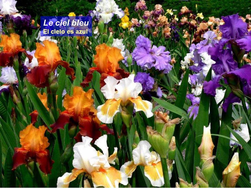 IRIS Missouri Botanical Garden St. Louis, Missouri Edith Piaff - LHymne à lAmour Fotografias del Jardín Botánico de San Luís. Missouri.