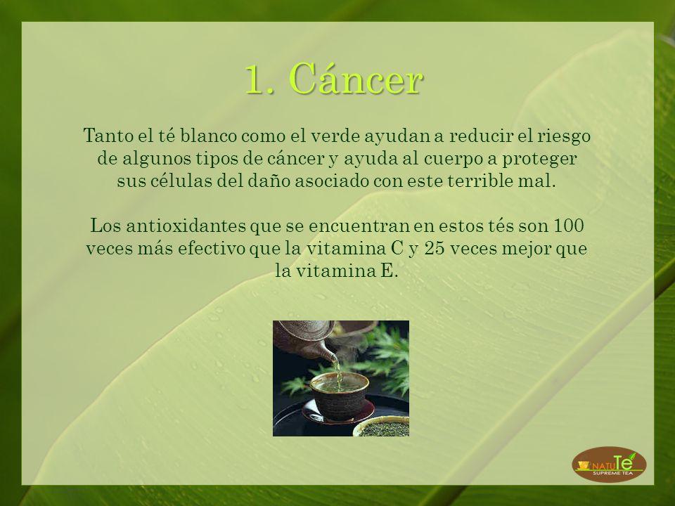 El té blanco ha sido prácticamente desconocido hasta ahora. Este té se produce del brote más jóven de la planta de té (Camellia Sinensis) antes de que