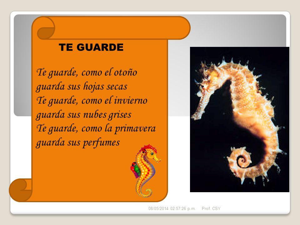 HIPOCAMPO – Caballito de mar El Hipocampo es un animal realmente curioso, desde la antigüedad los griegos le han dado lugar en su mitología.
