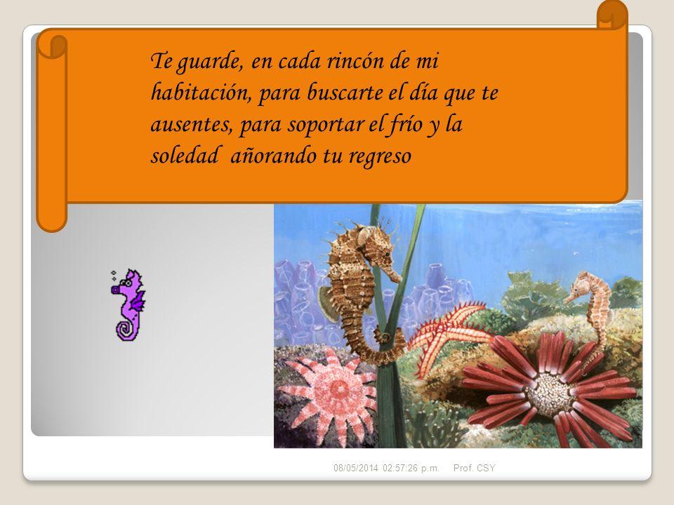 Los Hipocampos tienen una vida promedio entre uno y cuatro años, y pertenecen a la familia Syngnathidae junto con los peces pipa.