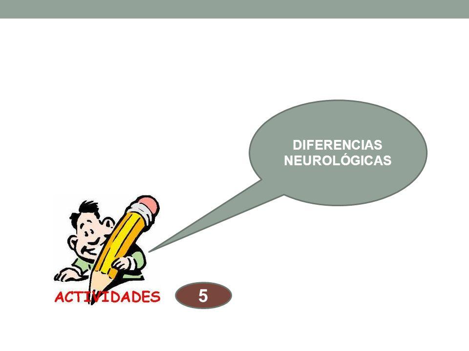 Diferencias neurológicas Si comparamos a un niño y a una niña con respecto a su adquisición del lenguaje. Habla primero, lee primero y adquiere con ma