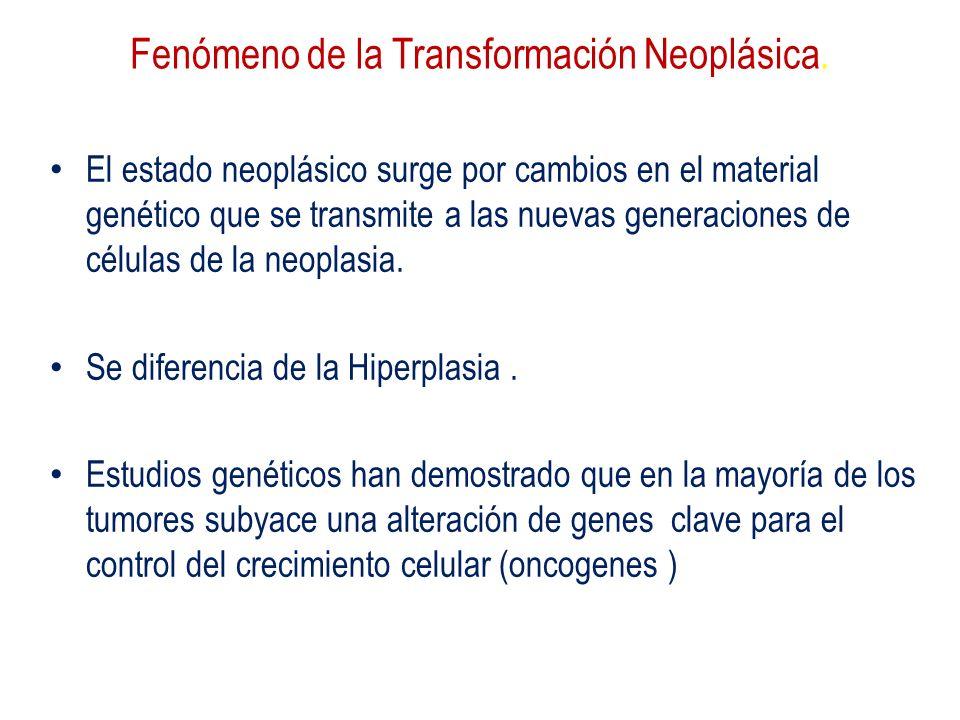 Fenómeno de la Transformación Neoplásica. El estado neoplásico surge por cambios en el material genético que se transmite a las nuevas generaciones de