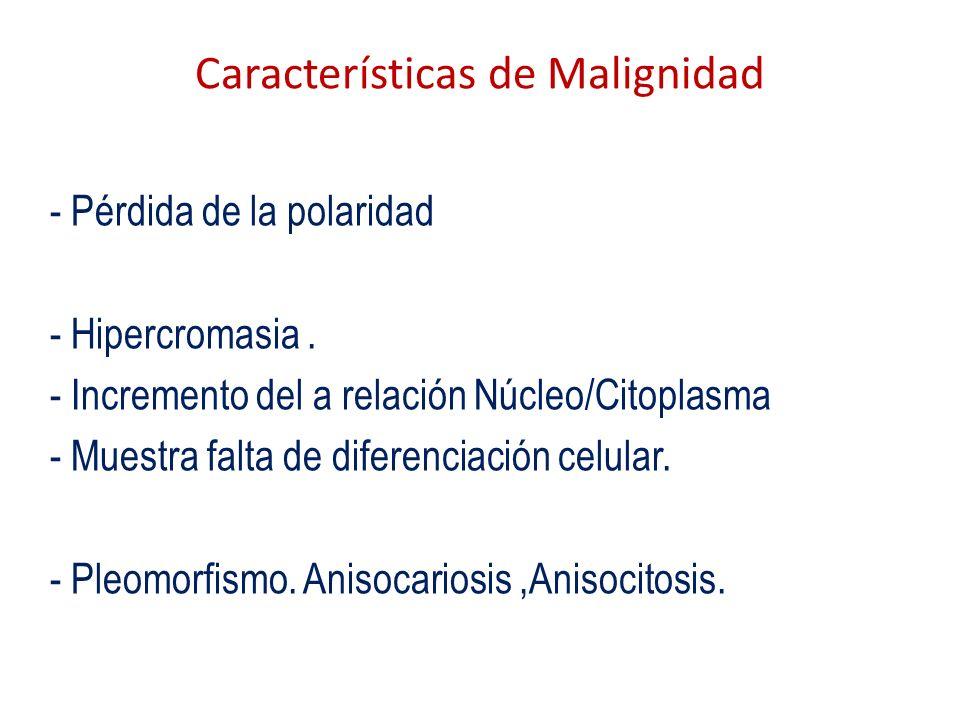 Características de Malignidad - Pérdida de la polaridad - Hipercromasia. - Incremento del a relación Núcleo/Citoplasma - Muestra falta de diferenciaci
