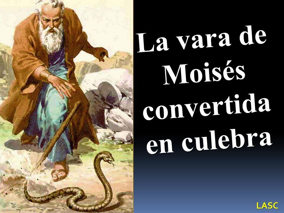 La vara de Moisés convertida en culebra LASC
