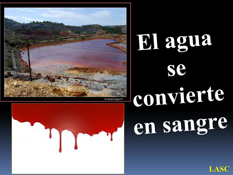 El agua se convierte en sangre LASC