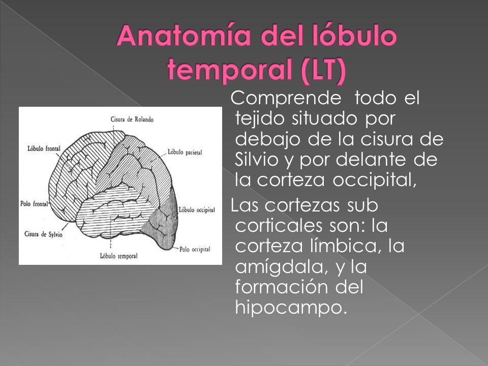 Comprende todo el tejido situado por debajo de la cisura de Silvio y por delante de la corteza occipital, Las cortezas sub corticales son: la corteza