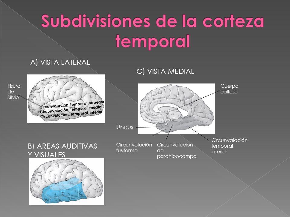 Circunvalación temporal superior Circunvolución temporal media Circunvolución temporal inferior A) VISTA LATERAL Fisura de Silvio C) VISTA MEDIAL Cuer