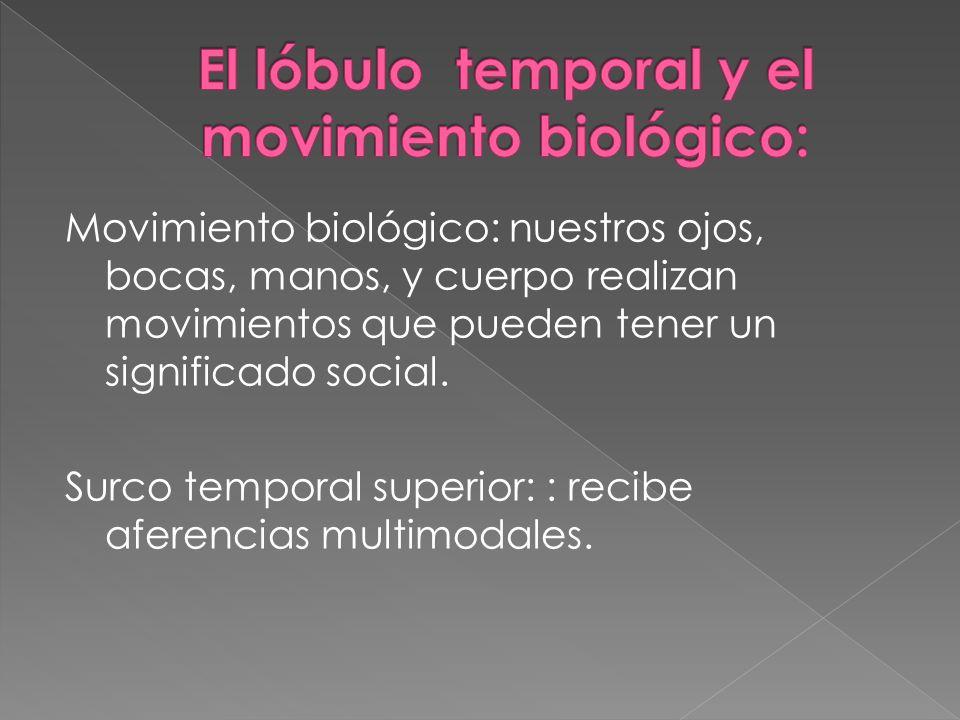 Movimiento biológico: nuestros ojos, bocas, manos, y cuerpo realizan movimientos que pueden tener un significado social. Surco temporal superior: : re