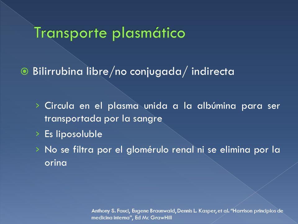 Bilirrubina libre/no conjugada/ indirecta Circula en el plasma unida a la albúmina para ser transportada por la sangre Es liposoluble No se filtra por