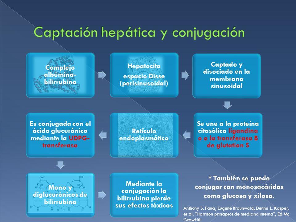 Complejo albúmina- bilirrubina Hepatocito espacio Disse (perisinusoidal) Captado y disociado en la membrana sinusoidal Se une a la proteína citosólica