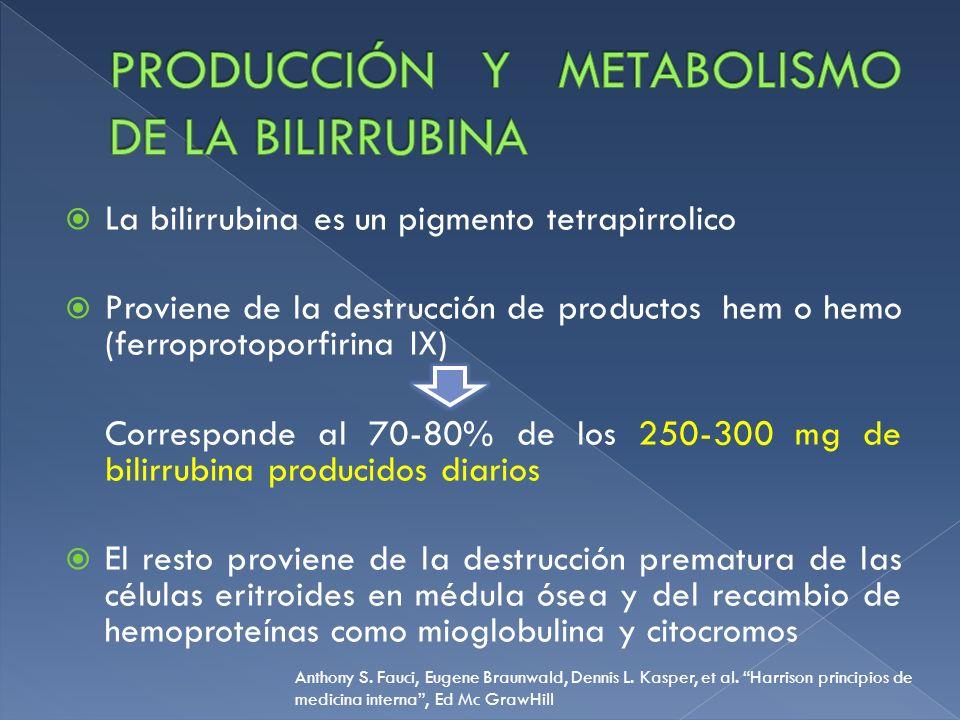 La bilirrubina es un pigmento tetrapirrolico Proviene de la destrucción de productos hem o hemo (ferroprotoporfirina IX) Corresponde al 70-80% de los