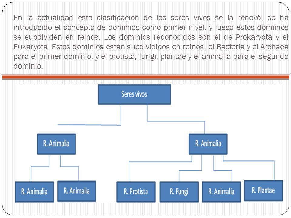 En la actualidad esta clasificación de los seres vivos se la renovó, se ha introducido el concepto de dominios como primer nivel, y luego estos dominios se subdividen en reinos.