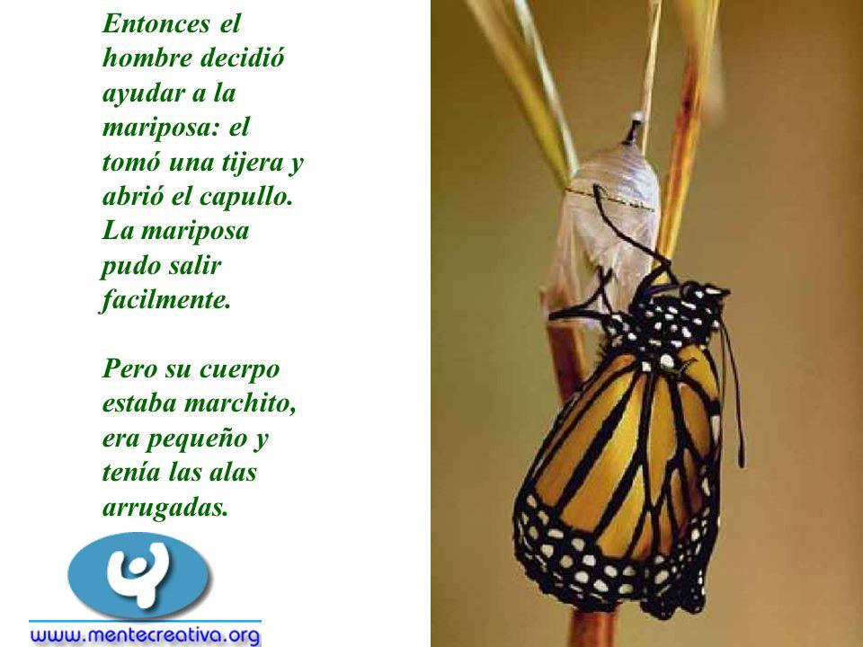 Entonces el hombre decidió ayudar a la mariposa: el tomó una tijera y abrió el capullo. La mariposa pudo salir facilmente. Pero su cuerpo estaba march