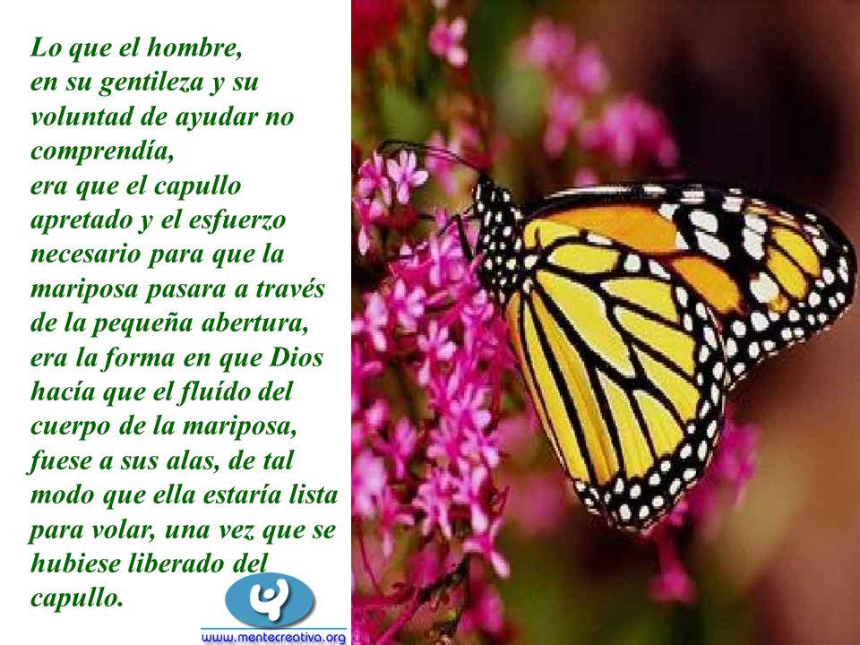 Lo que el hombre, en su gentileza y su voluntad de ayudar no comprendía, era que el capullo apretado y el esfuerzo necesario para que la mariposa pasa