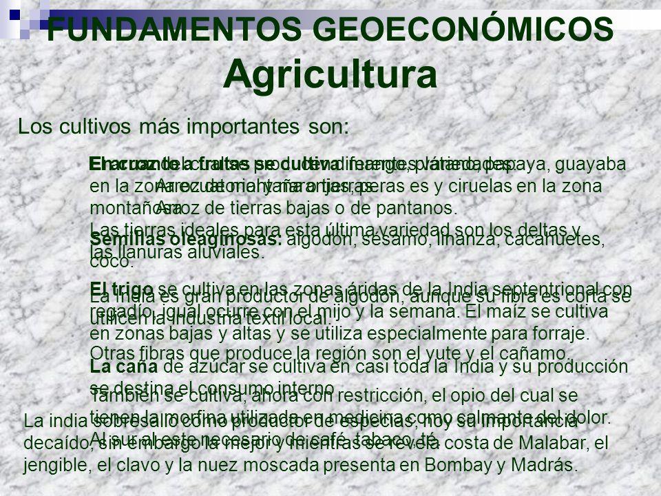 Los cultivos más importantes son: FUNDAMENTOS GEOECONÓMICOS Agricultura El arroz del cual se producen diferentes variedades: Arroz de montaña o tierra