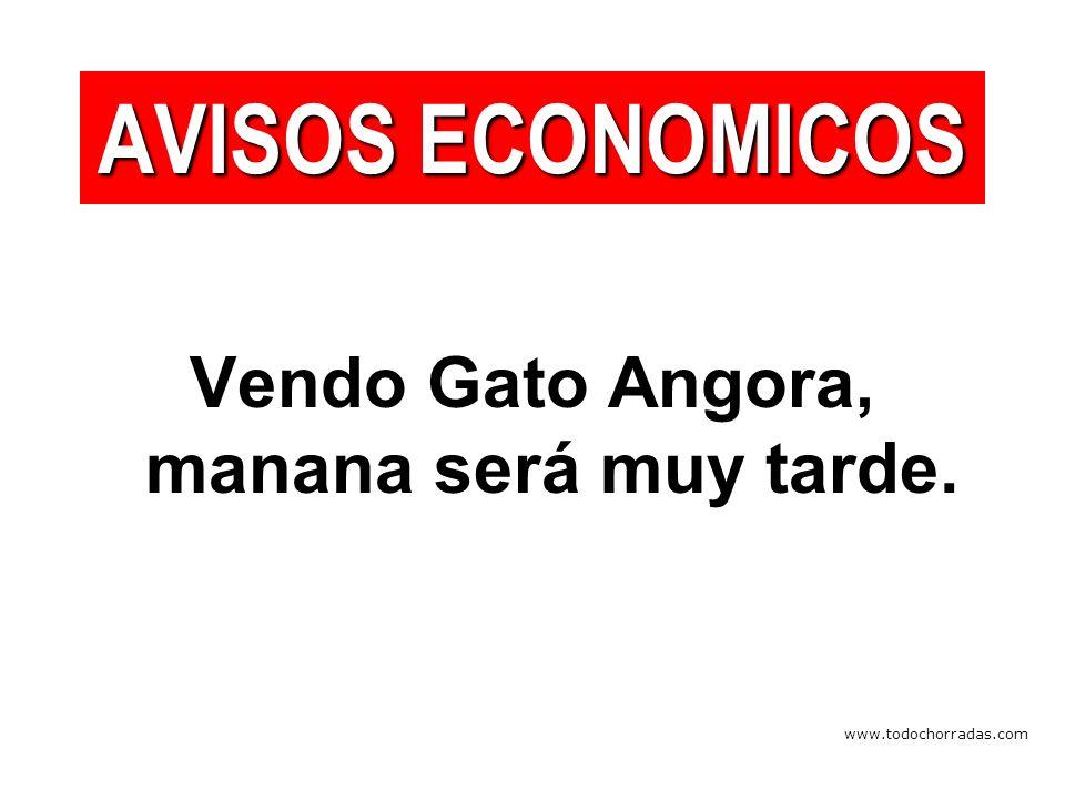 www.todochorradas.com Vendo Gato Angora, manana será muy tarde. AVISOS ECONOMICOS