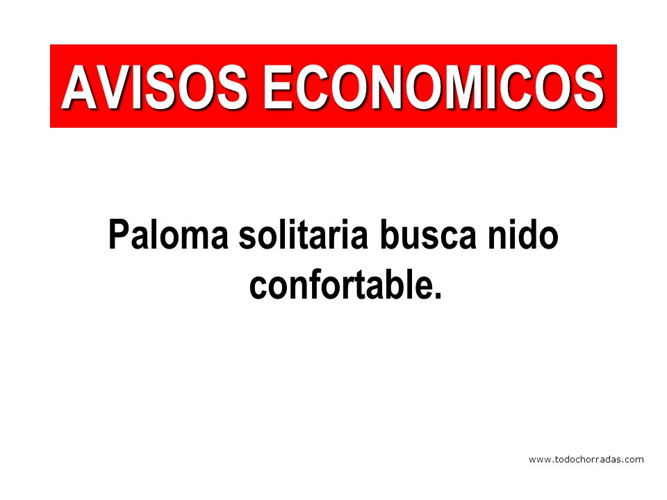 www.todochorradas.com Paloma solitaria busca nido confortable. AVISOS ECONOMICOS