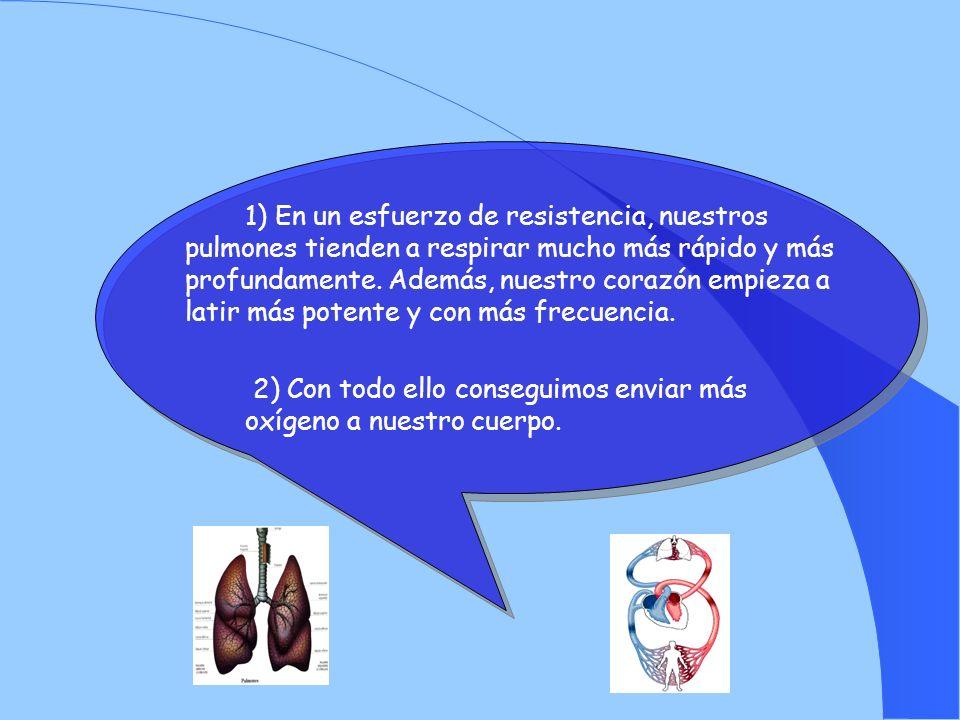 1) En un esfuerzo de resistencia, nuestros pulmones tienden a respirar mucho más rápido y más profundamente.