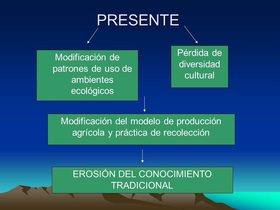 Discusión Recolección de plantas silvestres Transmisión vertical más conservadora No recibe influencias de agentes externos de promoción, sin embargo: Práctica desvalorizada en la actualidad.