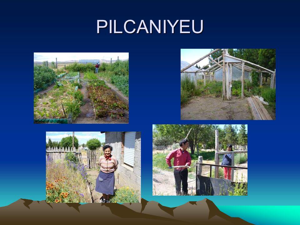 PILCANIYEU